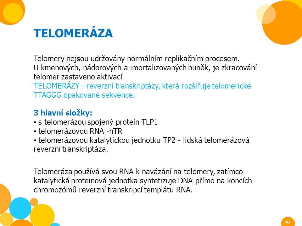 TELOMERÁZA Telomery nejsou udržovány normálním replikačním procesem. U kmenových, nádorových a imortalizovaných buněk, je zkracování telomer zastaveno
