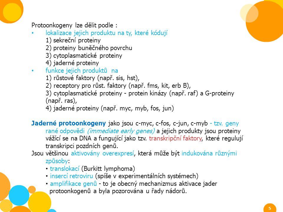 Protoonkogeny lze dělit podle : lokalizace jejich produktu na ty, které kódují 1) sekreční proteiny 2) proteiny buněčného povrchu 3) cytoplasmatické p