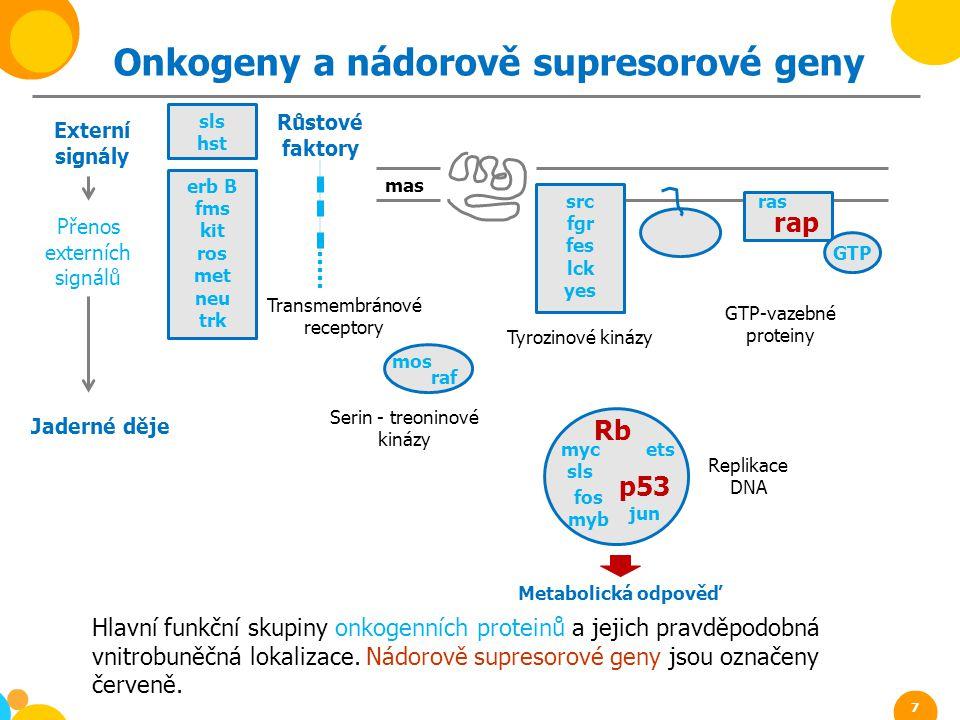 Onkogeny a nádorově supresorové geny Externí signály Přenos externích signálů Jaderné děje Růstové faktory Transmembránové receptory Tyrozinové kinázy
