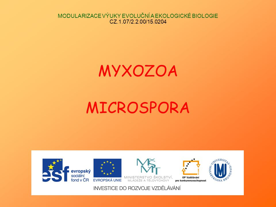 """Kmen MYXOZOA (""""myxosporidie ) (Říše Animalia)  intercelulární paraziti, paraziti tkání, orgánových dutin  původně protozoární kmen zahrnující 2 třídy (Myxosporea a Actinosporea)  od 80."""