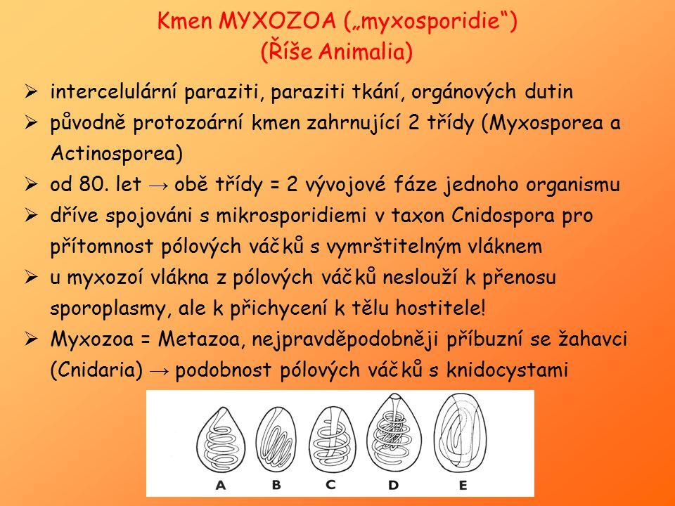 """Kmen MYXOZOA (""""myxosporidie"""") (Říše Animalia)  intercelulární paraziti, paraziti tkání, orgánových dutin  původně protozoární kmen zahrnující 2 tříd"""