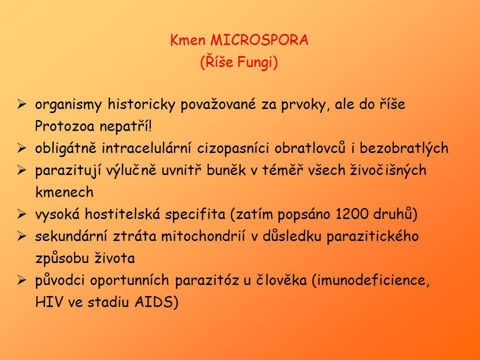 Kmen MICROSPORA (Říše Fungi)  organismy historicky považované za prvoky, ale do říše Protozoa nepatří!  obligátně intracelulární cizopasníci obratlo