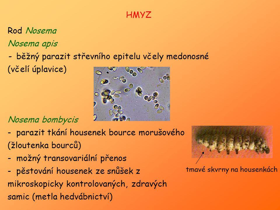 Rod Nosema Nosema apis - běžný parazit střevního epitelu včely medonosné (včelí úplavice) Nosema bombycis - parazit tkání housenek bource morušového (