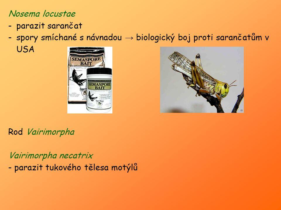Nosema locustae -parazit sarančat -spory smíchané s návnadou → biologický boj proti sarančatům v USA Rod Vairimorpha Vairimorpha necatrix - parazit tu