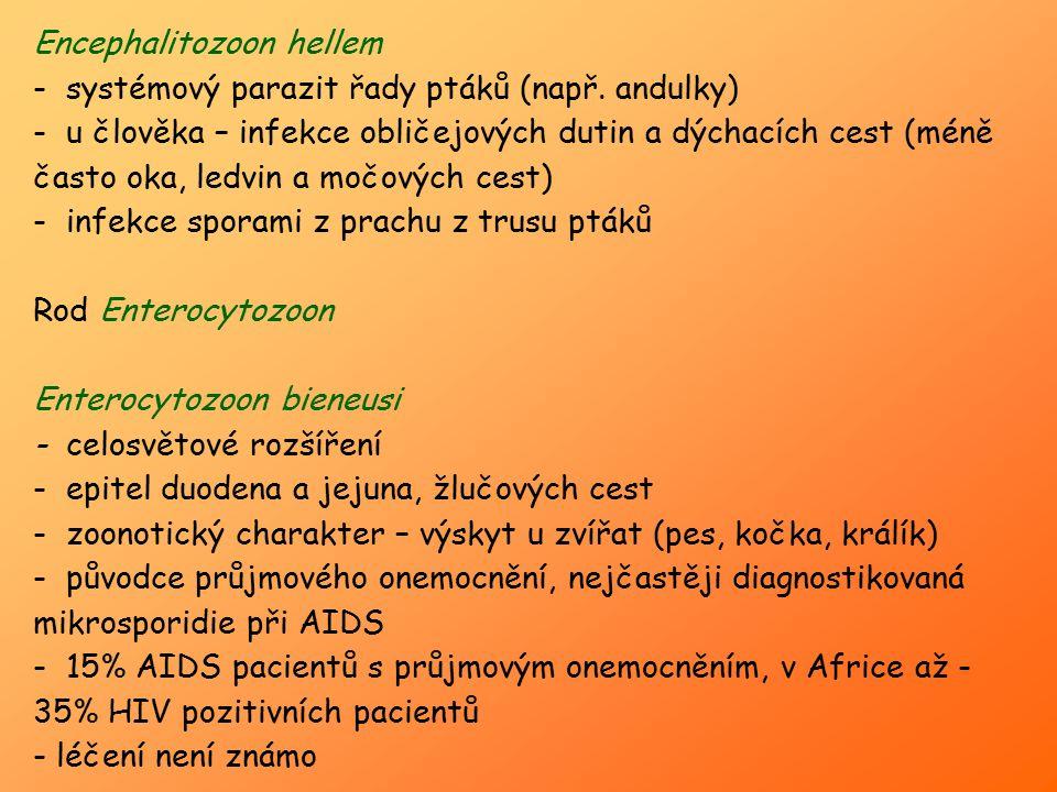 Encephalitozoon hellem - systémový parazit řady ptáků (např. andulky) - u člověka – infekce obličejových dutin a dýchacích cest (méně často oka, ledvi