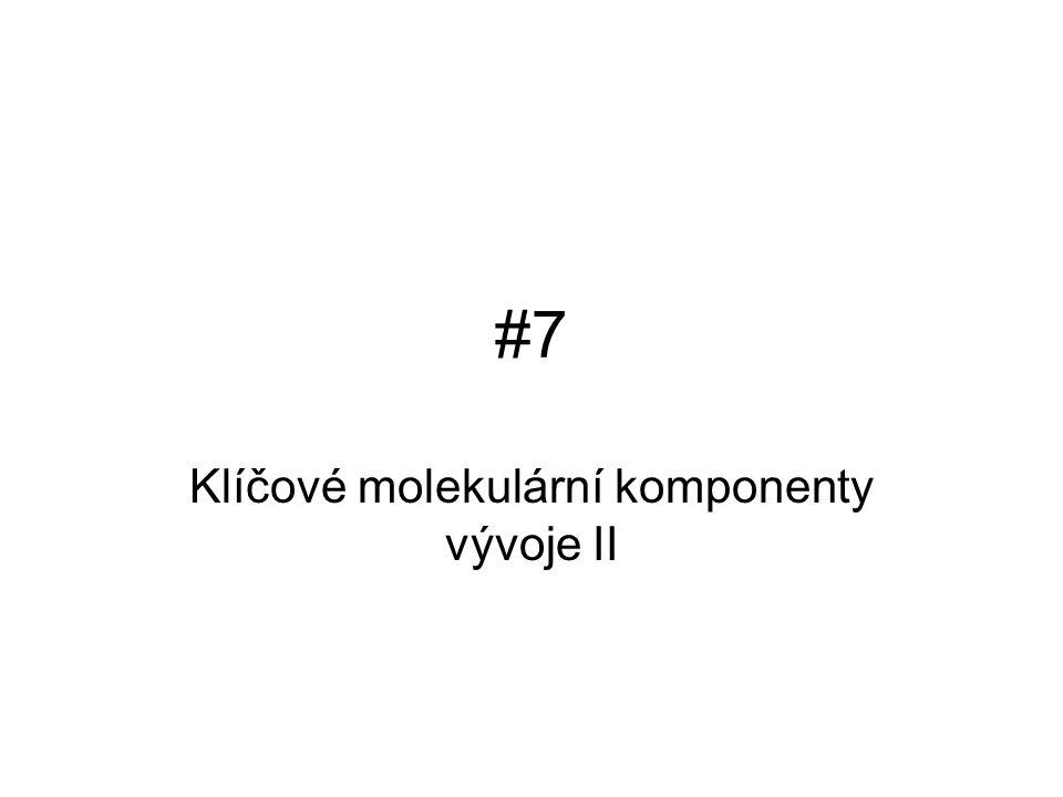 #7#7 Klíčové molekulární komponenty vývoje II