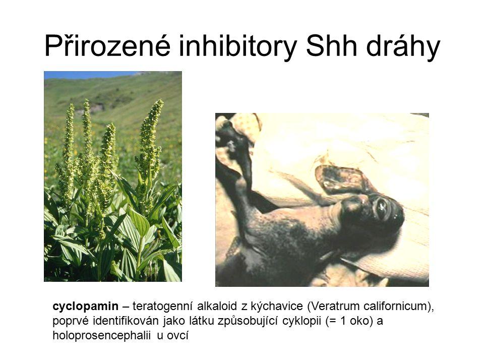 Přirozené inhibitory Shh dráhy cyclopamin – teratogenní alkaloid z kýchavice (Veratrum californicum), poprvé identifikován jako látku způsobující cykl