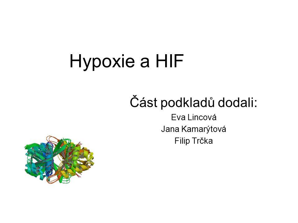 Hypoxie a HIF Část podkladů dodali: Eva Lincová Jana Kamarýtová Filip Trčka
