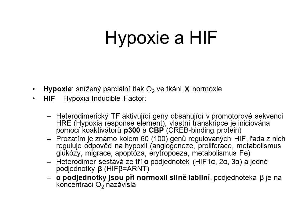 Hypoxie a HIF Hypoxie: snížený parciální tlak O 2 ve tkáni x normoxie HIF – Hypoxia-Inducible Factor: –Heterodimerický TF aktivující geny obsahující v