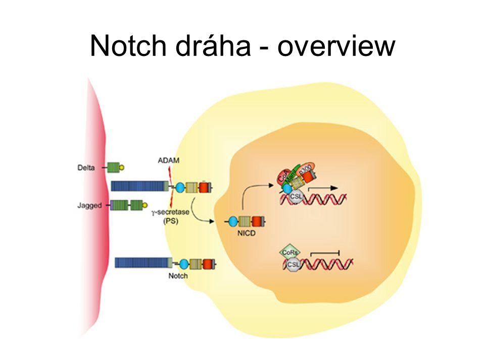 Notch dráha - overview