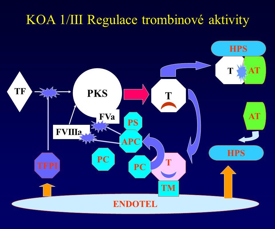 PS Regulace trombinové aktivity KOA 1/III Regulace trombinové aktivity PKS ENDOTEL FVIIIa FVa TM T T T PC APC TFPI TF HPS AT HPS AT T