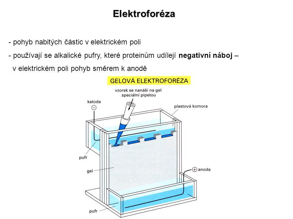 Elektroforéza - pohyb nabitých částic v elektrickém poli - používají se alkalické pufry, které proteinům udílejí negativní náboj – v elektrickém poli