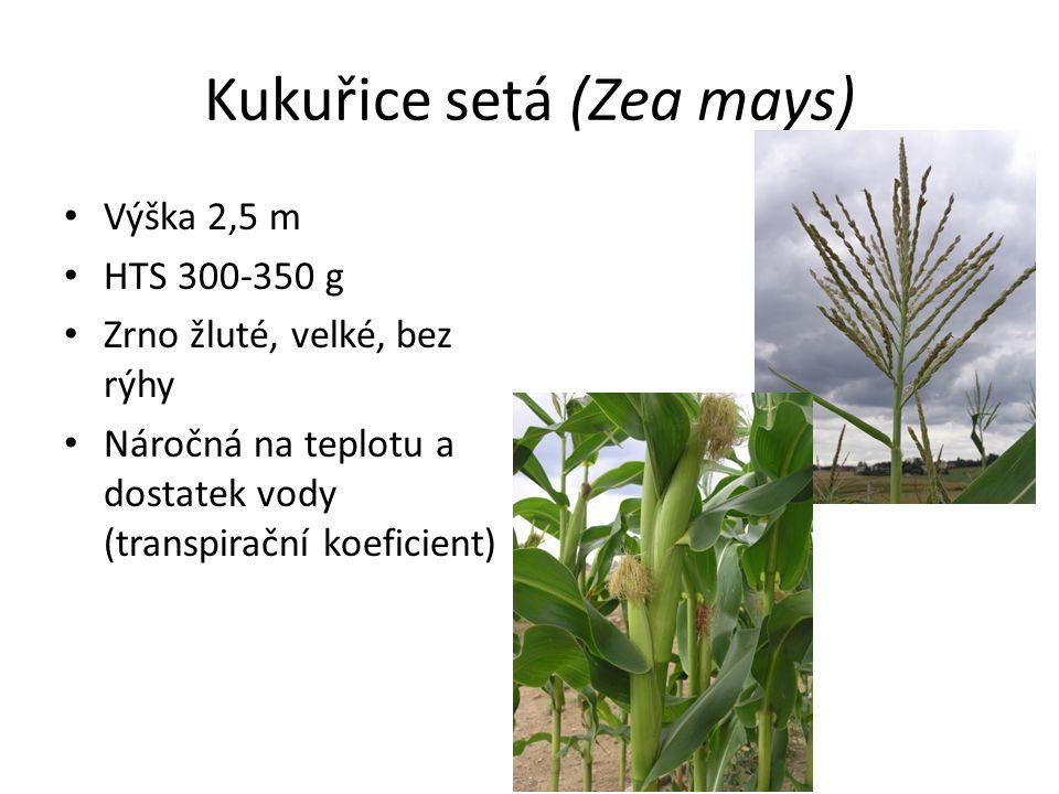 Kukuřice setá (Zea mays) Využití na zrno, siláž (řezaná), zelené krmení, pro kvasné procesy v bioplynových stanicích Pěstují se hybridní rostliny – využije se po zasetí vhodné vlastnosti u první generace Označují se číslem FAO – číslo ranosti, značí délku vegetační doby Čím chladnější oblast, tím ranější hybrid Bramborářská oblast FAO 160 – 250 Řepařská oblast FAO 250 – 300 Kukuřičná oblast FAO 300 – 400