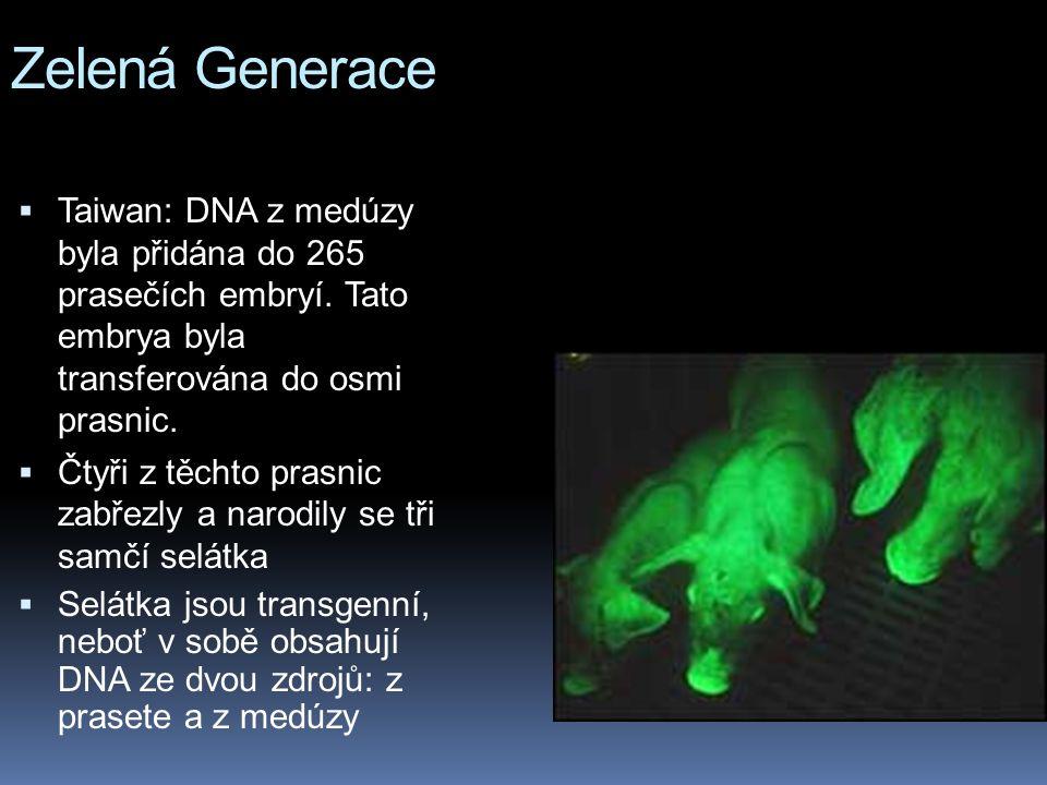Zelená Generace  Taiwan: DNA z medúzy byla přidána do 265 prasečích embryí.