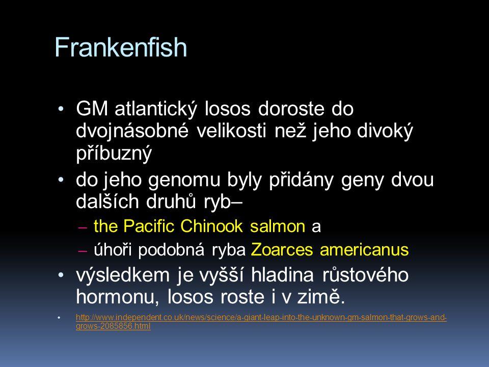 GM atlantický losos doroste do dvojnásobné velikosti než jeho divoký příbuzný do jeho genomu byly přidány geny dvou dalších druhů ryb– – the Pacific Chinook salmon a – úhoři podobná ryba Zoarces americanus výsledkem je vyšší hladina růstového hormonu, losos roste i v zimě.