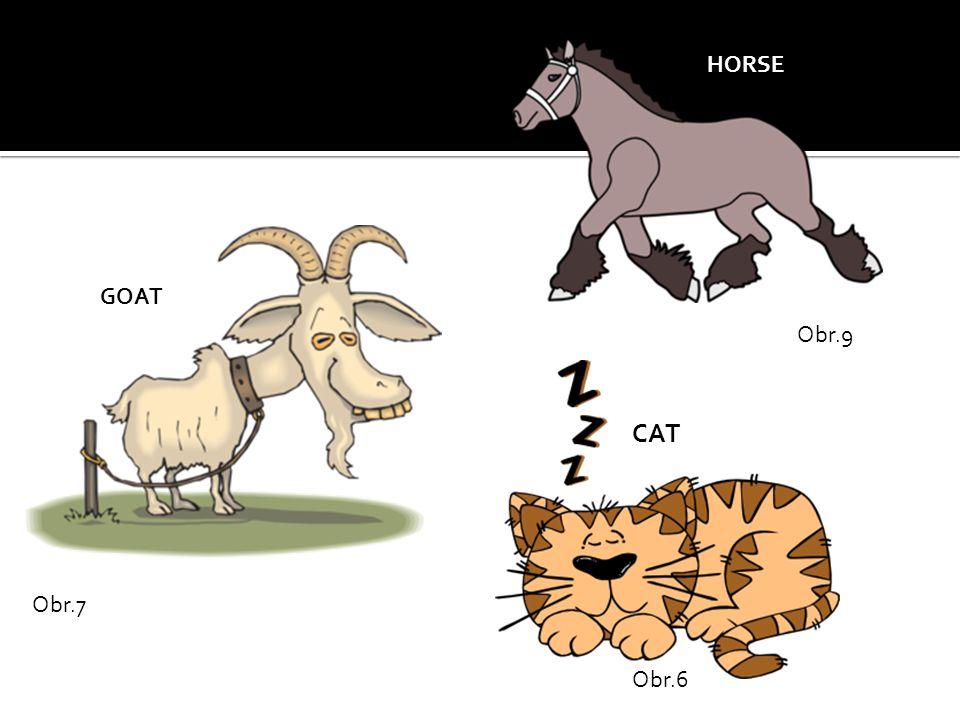 Obr.6 CAT Obr.7 GOAT Obr.9 HORSE