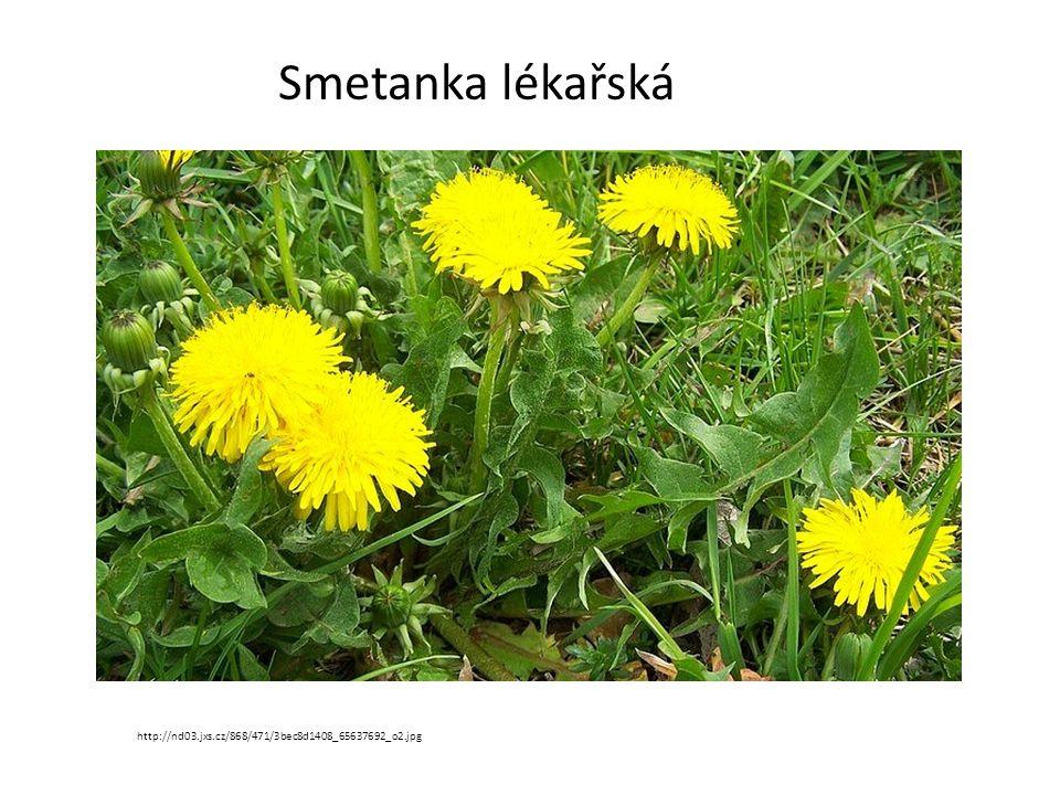 Smetanka lékařská http://nd03.jxs.cz/868/471/3bec8d1408_65637692_o2.jpg