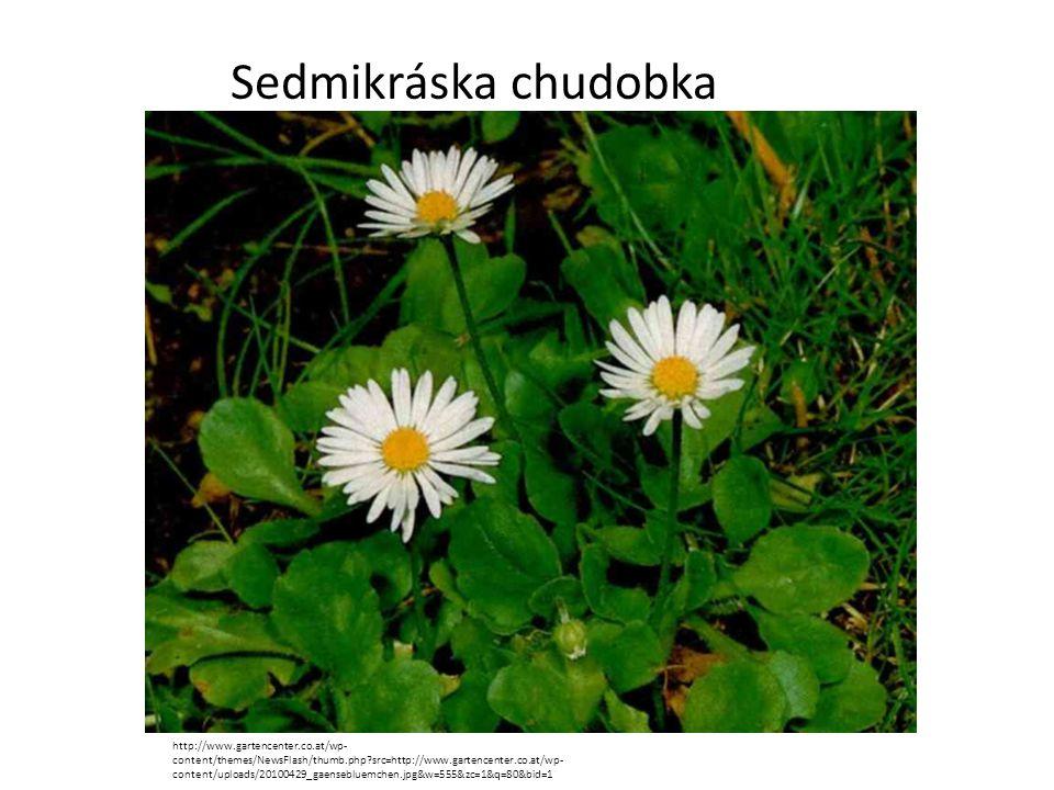 Mochna husí http://upload.wikimedia.org/wikipedia/commons/thumb/2/20/Zilverschoon_plant_Potentilla_anserina.j pg/258px-Zilverschoon_plant_Potentilla_anserina.jpg