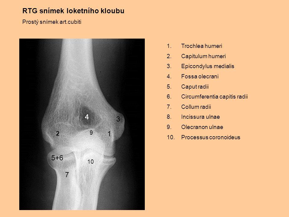 RTG snímek loketního kloubu Prostý snímek art.cubiti 1.Trochlea humeri 2.Capitulum humeri 3.Epicondylus medialis 4.Fossa olecrani 5.Caput radii 6.Circ