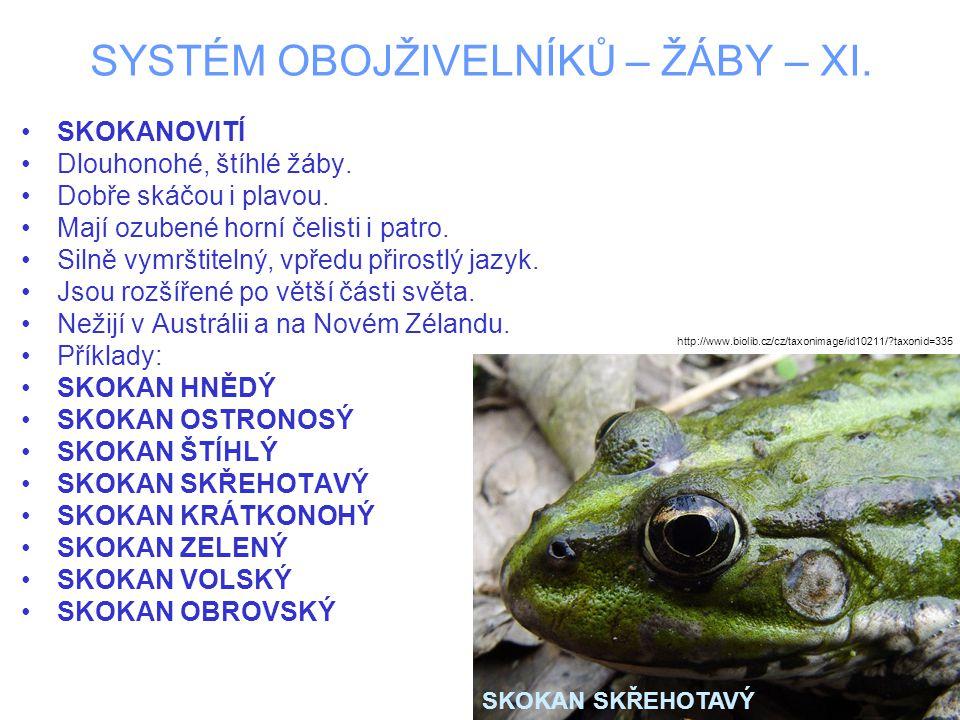SYSTÉM OBOJŽIVELNÍKŮ – ŽÁBY – XI. SKOKANOVITÍ Dlouhonohé, štíhlé žáby.