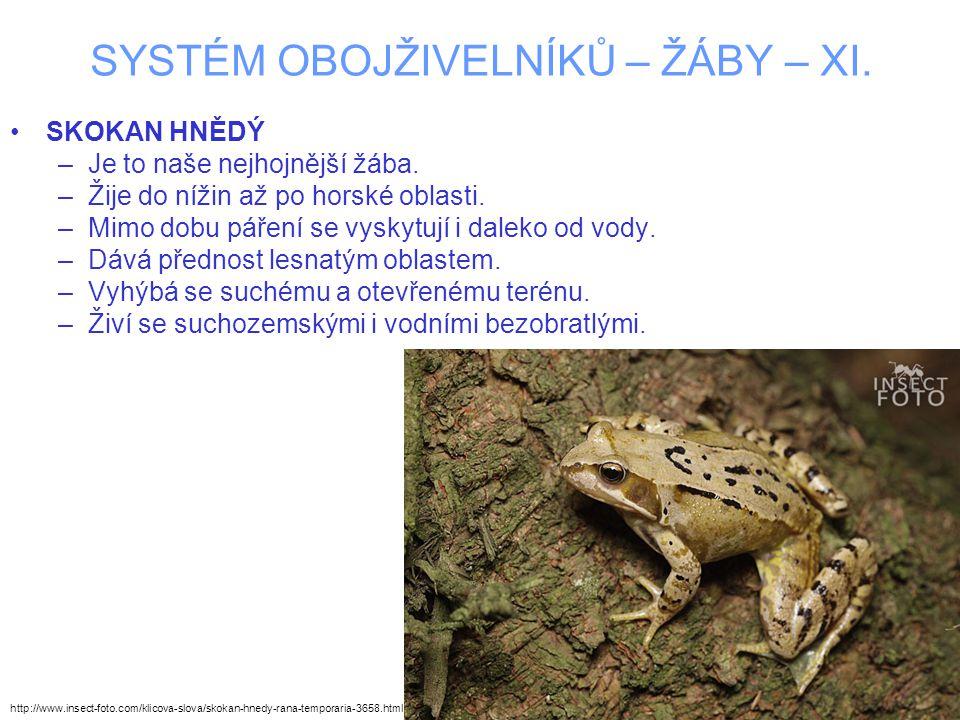 SYSTÉM OBOJŽIVELNÍKŮ – ŽÁBY – XI. SKOKAN HNĚDÝ –Je to naše nejhojnější žába.