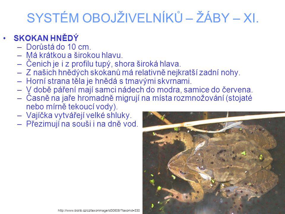 SYSTÉM OBOJŽIVELNÍKŮ – ŽÁBY – XI. SKOKAN HNĚDÝ –Dorůstá do 10 cm.
