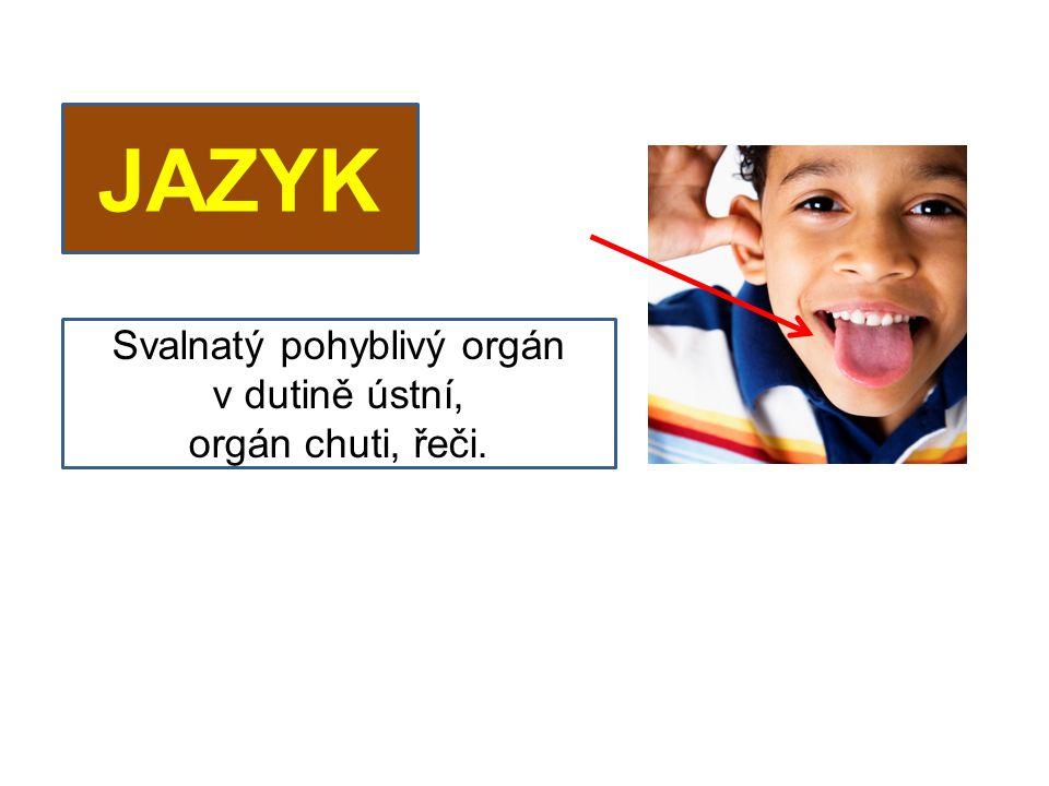 JAZYK Svalnatý pohyblivý orgán v dutině ústní, orgán chuti, řeči.