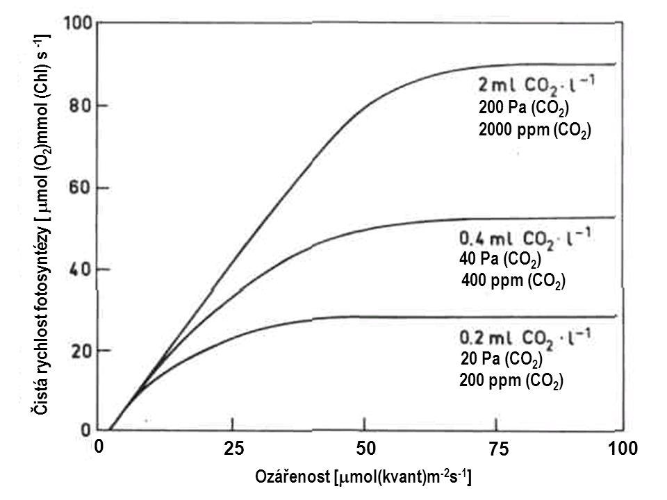 Čistá rychlost fotosyntézy [  mol (O 2 )mmol (Chl) s -1 ] 0 2550 75 100 Ozářenost [  mol(kvant)m -2 s -1 ] 200 Pa (CO 2 ) 2000 ppm (CO 2 ) 40 Pa (CO