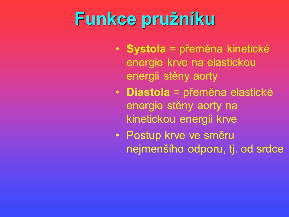 Funkce pružníku Systola = přeměna kinetické energie krve na elastickou energii stěny aorty Diastola = přeměna elastické energie stěny aorty na kinetic