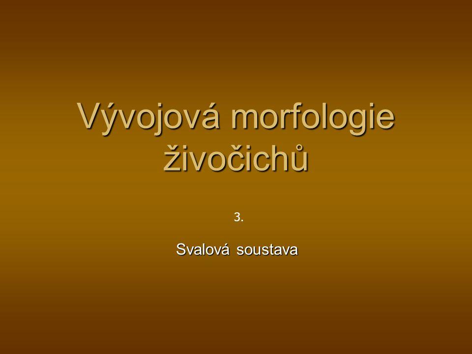 Vývojová morfologie živočichů Svalová soustava 3.