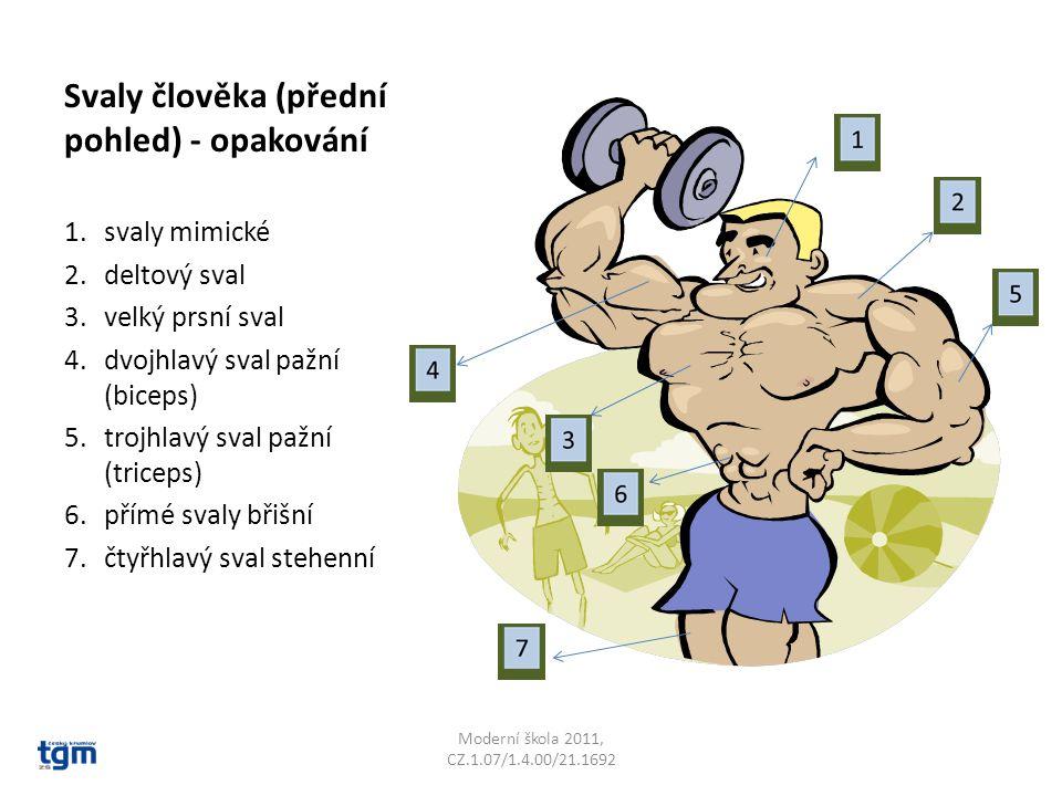 Svaly člověka (přední pohled) - opakování 1.svaly mimické 2.deltový sval 3.velký prsní sval 4.dvojhlavý sval pažní (biceps) 5.trojhlavý sval pažní (tr