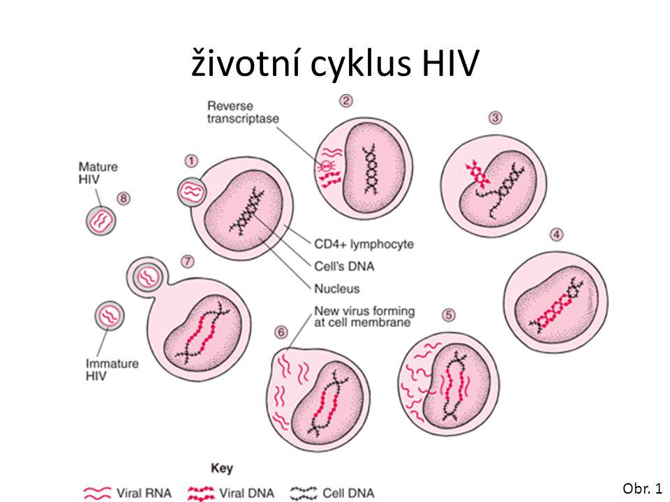 životní cyklus HIV Obr. 1