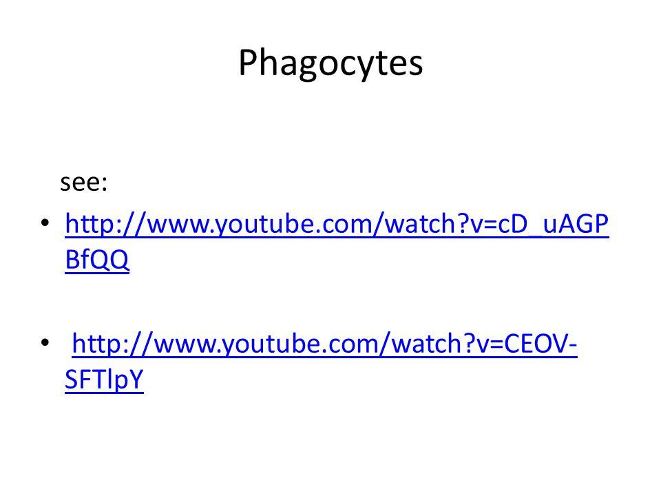 Phagocytes see: http://www.youtube.com/watch v=cD_uAGP BfQQ http://www.youtube.com/watch v=cD_uAGP BfQQ http://www.youtube.com/watch v=CEOV- SFTlpYhttp://www.youtube.com/watch v=CEOV- SFTlpY