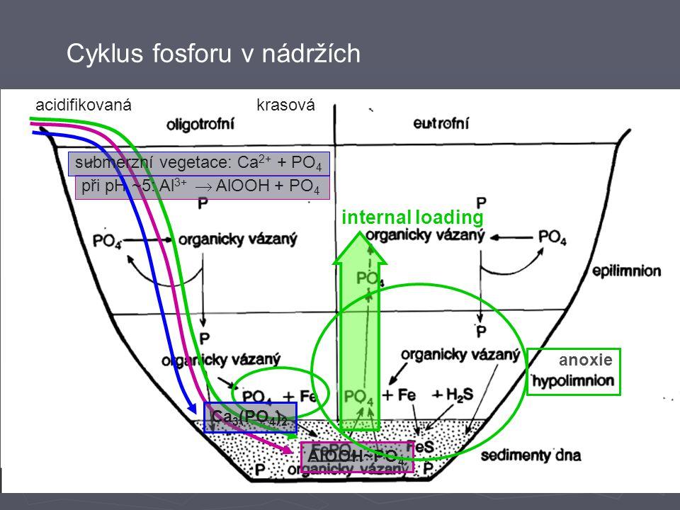 Cyklus fosforu v nádržích acidifikovaná při pH ~5: Al 3+  AlOOH + PO 4 AlOOH~PO 4 krasová submerzní vegetace: Ca 2+ + PO 4 Ca 3 (PO 4 ) 2 internal loading anoxie