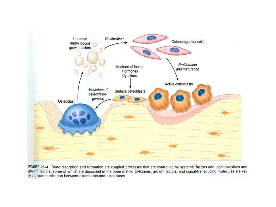 Ostitis Ost(-eomyel)itis purulenta: z okolí, hematogenní šíření Akutní fáze absces-flegmona = v intertrabekulárních prostorách, tlak exs na cévy  trombozy  nekrotizace trámečků.