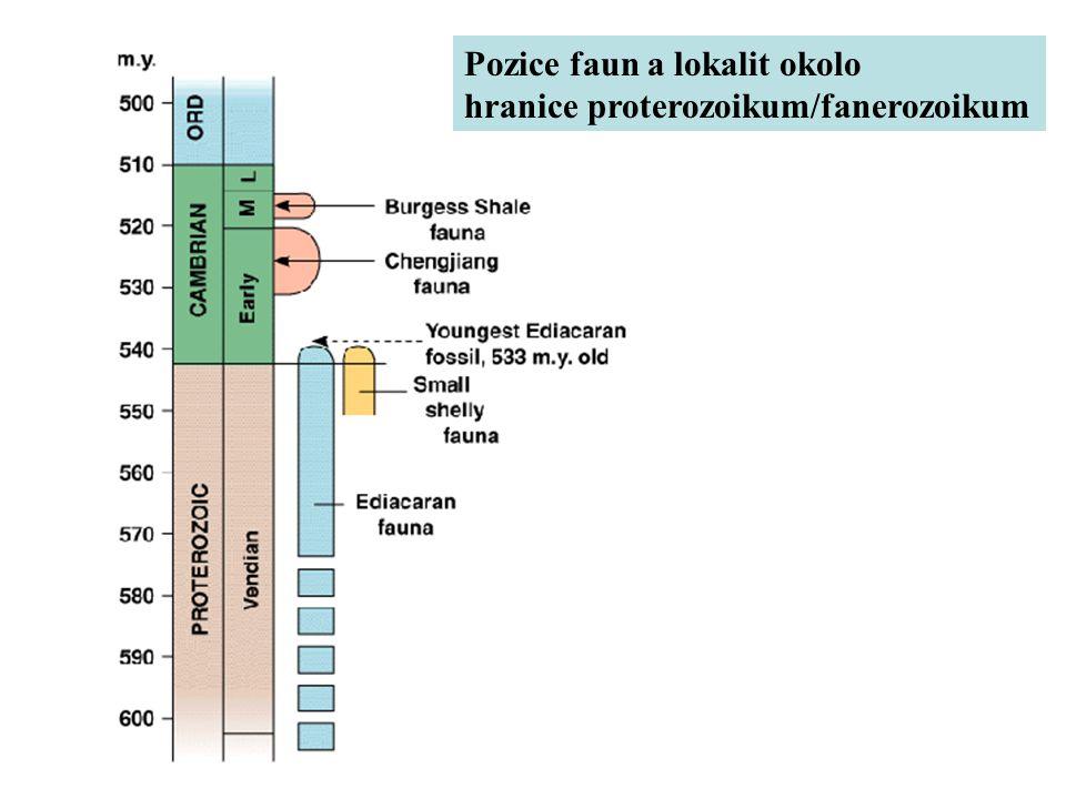 Pozice faun a lokalit okolo hranice proterozoikum/fanerozoikum