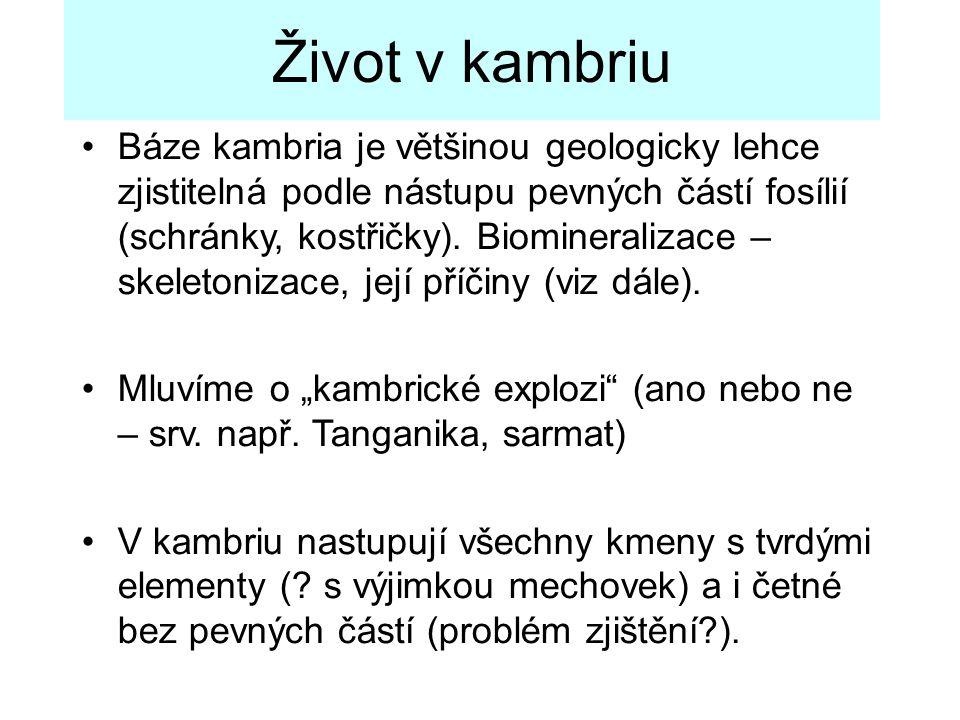 Báze kambria je většinou geologicky lehce zjistitelná podle nástupu pevných částí fosílií (schránky, kostřičky). Biomineralizace – skeletonizace, její