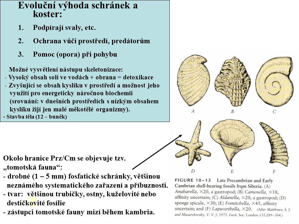 Evoluční výhoda schránek a koster: 1.Podpírají svaly, etc. 2.Ochrana vůči prostředí, predátorům 3.Pomoc (opora) při pohybu Možné vysvětlení nástupu sk