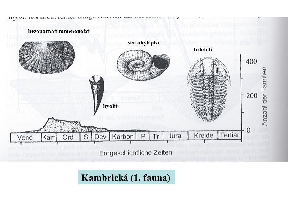 Kambrická (1. fauna) bezopornatí ramenonožci hyoliti starobylí plži trilobiti