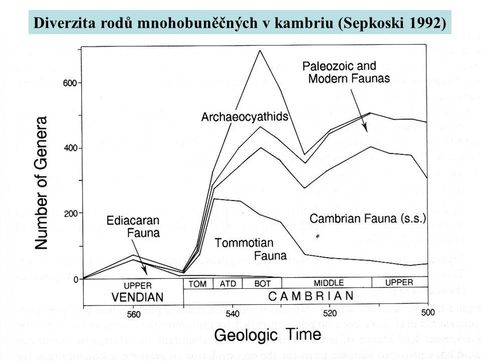 Diverzita rodů mnohobuněčných v kambriu (Sepkoski 1992)