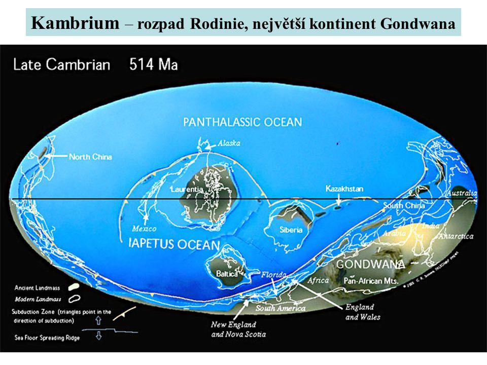 Kambrium – rozpad Rodinie, největší kontinent Gondwana