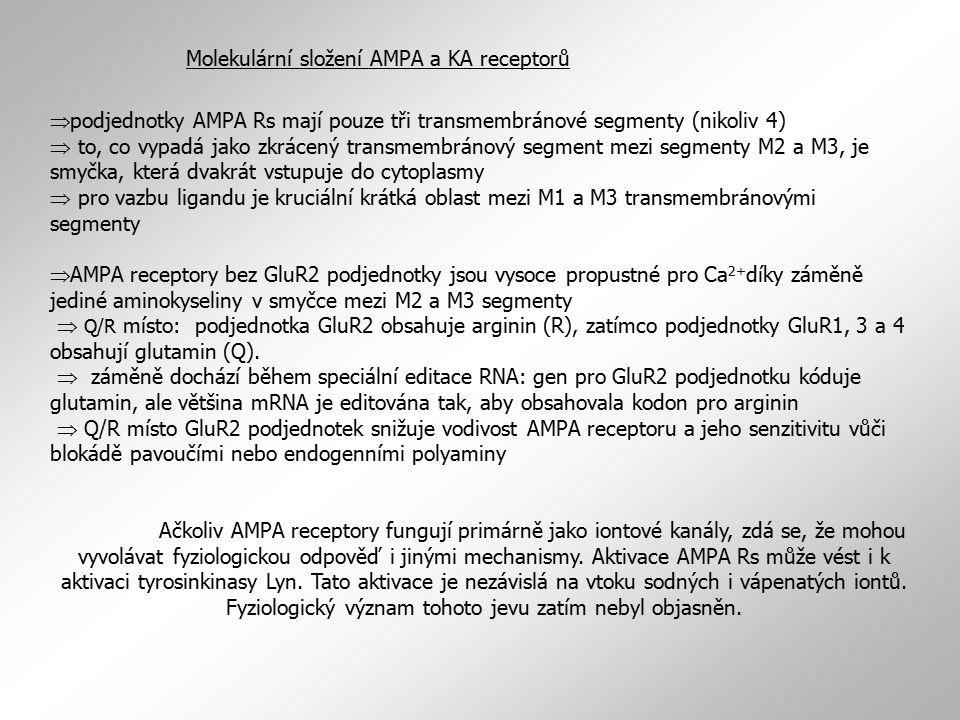  podjednotky AMPA Rs mají pouze tři transmembránové segmenty (nikoliv 4)  to, co vypadá jako zkrácený transmembránový segment mezi segmenty M2 a M3,