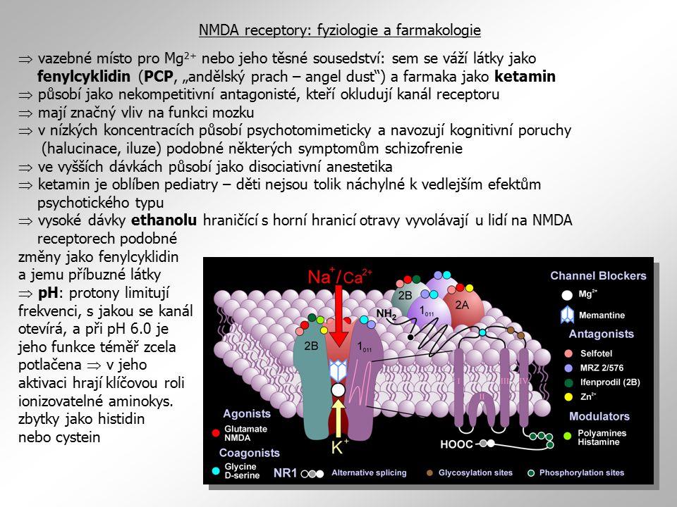 """ vazebné místo pro Mg 2+ nebo jeho těsné sousedství: sem se váží látky jako fenylcyklidin (PCP, """"andělský prach – angel dust"""") a farmaka jako ketamin"""