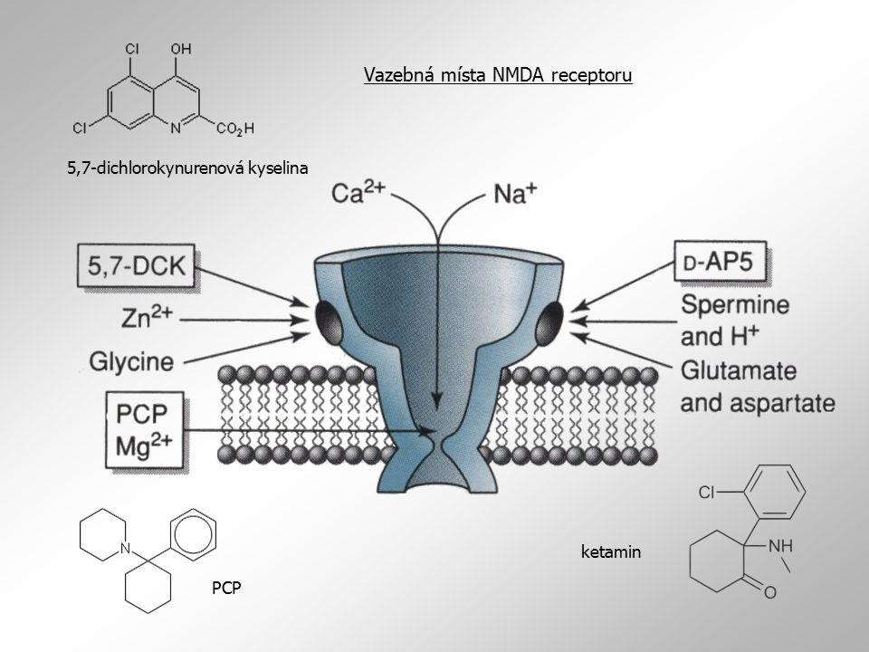 Vazebná místa NMDA receptoru 5,7-dichlorokynurenová kyselina PCP ketamin