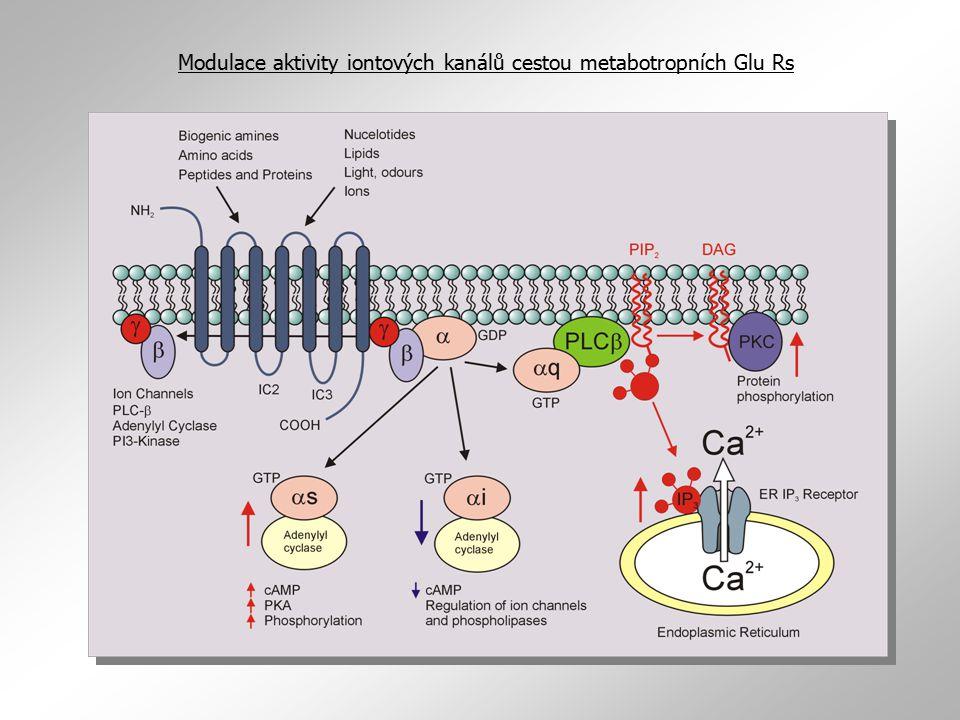 Modulace aktivity iontových kanálů cestou metabotropních Glu Rs