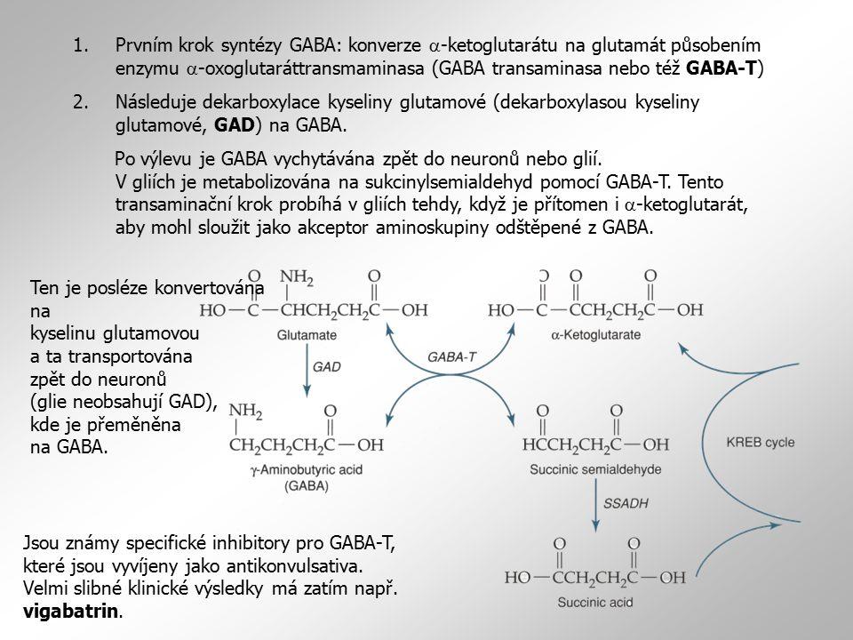 1.Prvním krok syntézy GABA: konverze  -ketoglutarátu na glutamát působením enzymu  -oxoglutaráttransmaminasa (GABA transaminasa nebo též GABA-T) 2.N