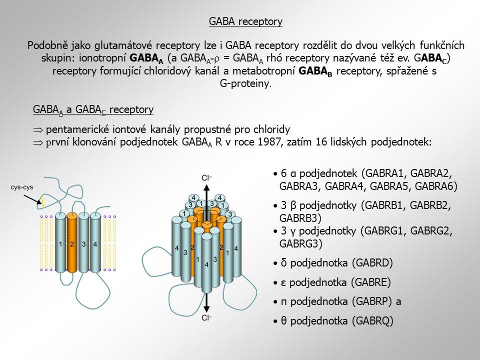 GABA receptory Podobně jako glutamátové receptory lze i GABA receptory rozdělit do dvou velkých funkčních skupin: ionotropní GABA A (a GABA A -  = GA