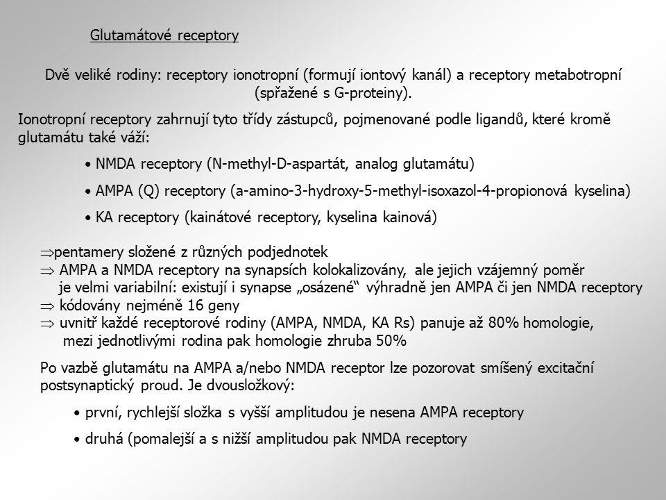 GABA receptory Podobně jako glutamátové receptory lze i GABA receptory rozdělit do dvou velkých funkčních skupin: ionotropní GABA A (a GABA A -  = GABA A rhó receptory nazývané též ev.