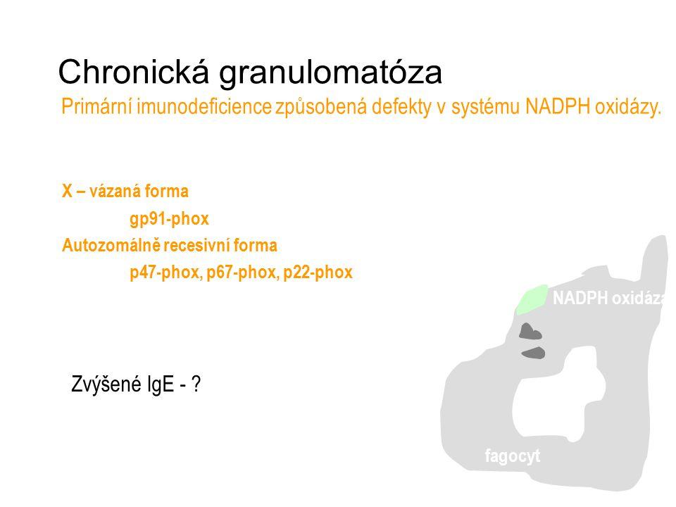Chronická granulomatóza Primární imunodeficience způsobená defekty v systému NADPH oxidázy. fagocyt NADPH oxidáza X – vázaná forma gp91-phox Autozomál