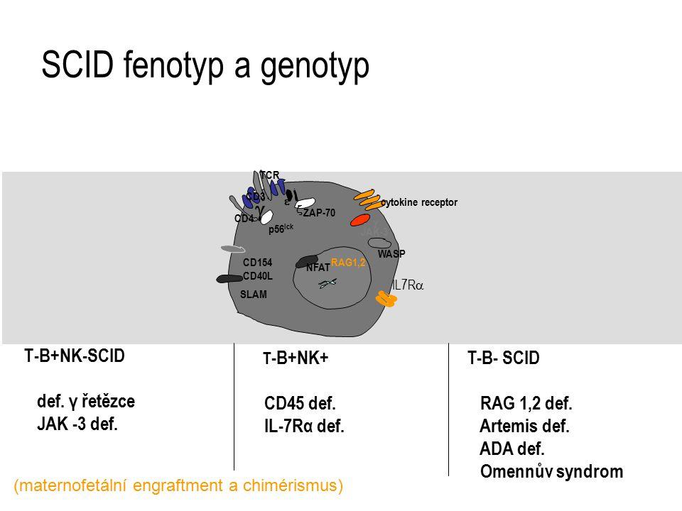 SCID fenotyp a genotyp T-B+NK-SCID def. γ řetězce JAK -3 def. T-B- SCID RAG 1,2 def. Artemis def. ADA def. Omennův syndrom T -B+NK+ CD45 def. IL-7Rα d